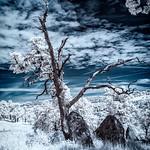 Scott Frost (scottfrost)'s photo